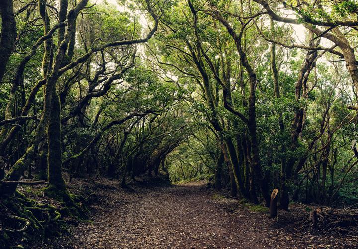 Reserva de la Biosfera de Anaga